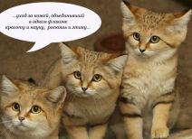 Несерьезное пятничное: котики и релизы