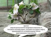 Котики и релизы